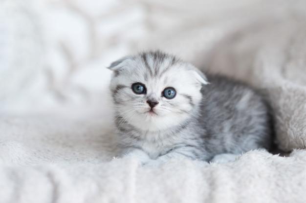 nuttet kat